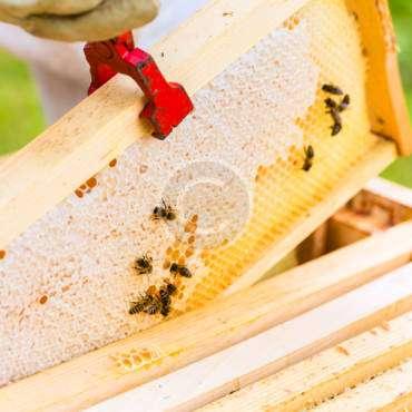 Tutorial: Beekeeping Plans, Supplies & Ideas